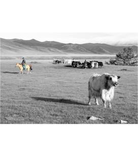 Yak Mongolien